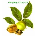 Логотип Грецкий Орех
