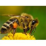 Логотип Пчеловодная одежда и инвентарь