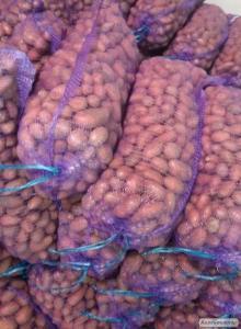 Картопля від виробника