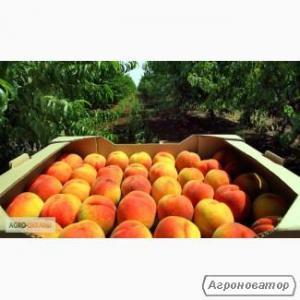 Ящики ЕВРОПЕЙКА для персиков, абрикос, сливы, винограда