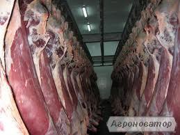 Продам яловичину на кістці.