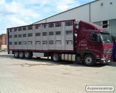 Предлагаю услуги скотовозов 8 и 12 тонн