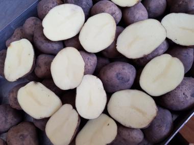 картопля продовольча