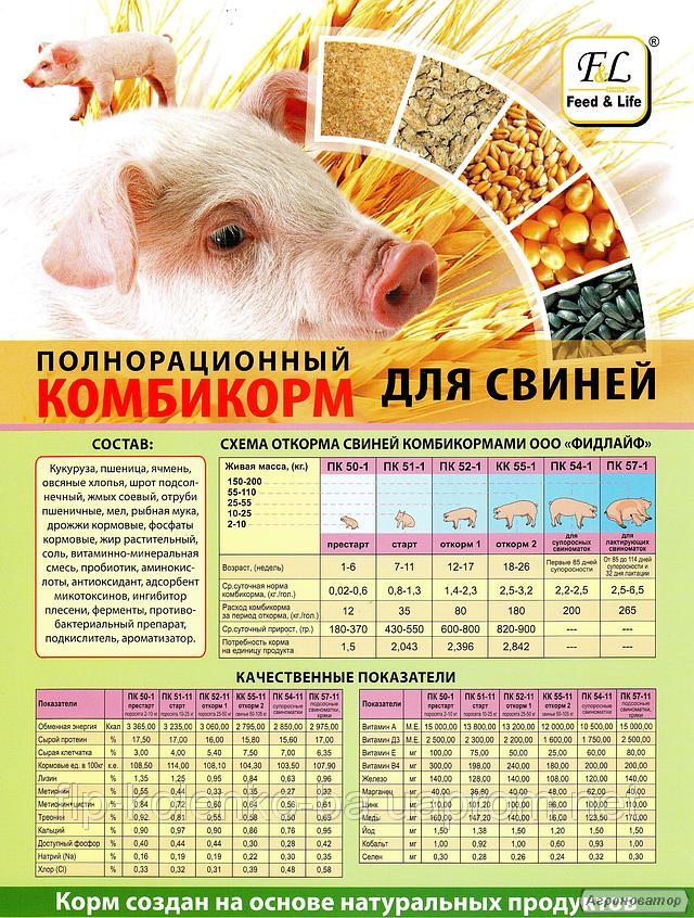 Как приготовить комбикорм в домашних условиях для свиней