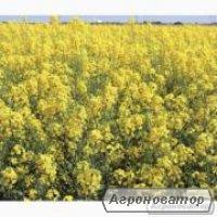 Семена озимого рапса Monsanto гибрид ДК Седона