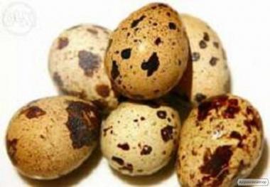 Перепелині яйця для інкубації