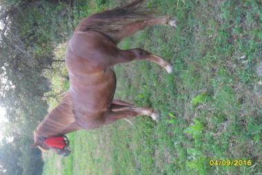 Лошадь 3 года