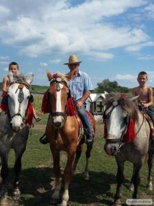 продаю коней