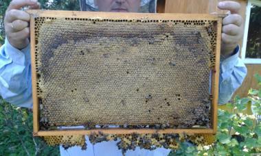 Пчелопакеты, пчелы