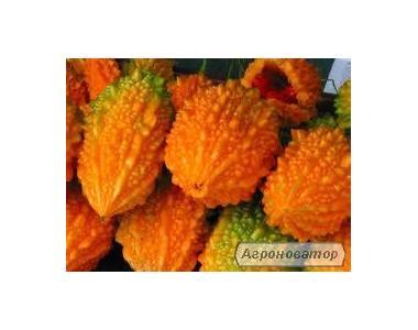 семена, насіння екзотичних рослин.