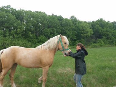 Продам лошадь соловой масти, 4 годика
