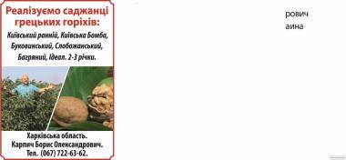 Саджанці волоських горіхів