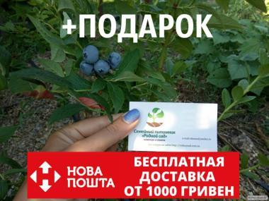 Голубика семена (20 штук) насіння лохини, косточка, семечка