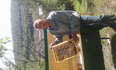 Пчелопаеты Карпатської породи