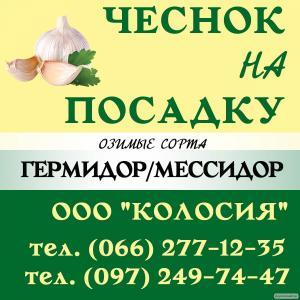 Семена чеснока - чеснок на посадку, купити насіння часнику озимого.