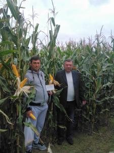 Семена кукурузы ДН Пивиха, Оржица, Днепровский, Кремень, Моника,