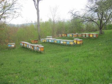 продам пчелопакеты карпатки и молодых плодных пчеломаток.
