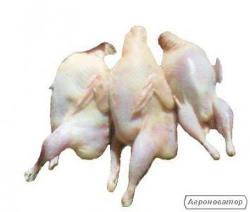 Тушки перепелів (м'ясо)