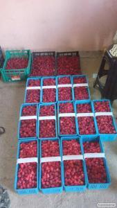 Выращиваем и продаем малину ( ягоды и саженцы)