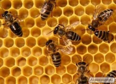 Пчелопакети 4+1