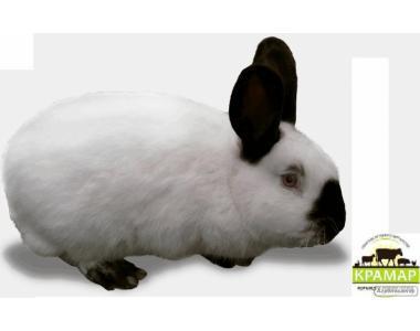 Корм для кроликов без травяной муки