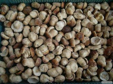 Белые грибы ( свежие, сухие , соленые, мороженые) , есть также грибы лисички