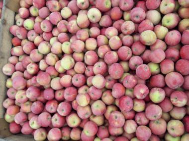 Продам яблоки сортов Голден и Фуджи из холодильника