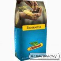 Семена озимого рапса Monsanto гибрид Экзекьютив