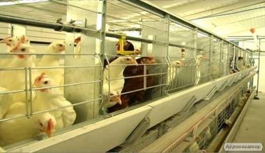 Клеточное оборудования для содержания  родительского стада кур-несушек