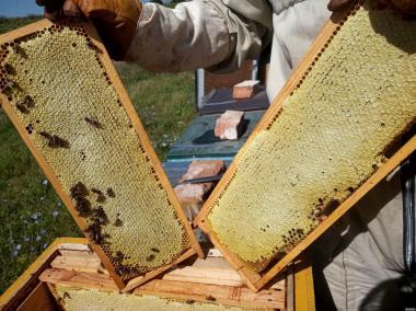 Продам Бджолосім`ї (Карніка, Бакфаст) 100 шт.