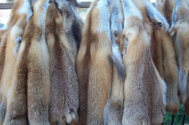 Продам шкуры лисы, норки,ондатры.и др.
