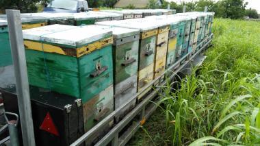 Продам прицеп-платформу для пчел на 42 семьи