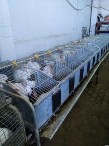 продам клетки для фермерского разведения кроликов ( б/у )