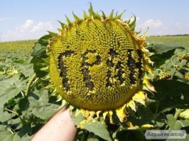 """насіння соняшнику """"Атілла"""""""