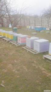 Продам пчелопакеты - карпатка! Ульи корпусные и я щики под пчелопакеты