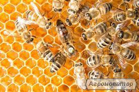 пчелопакети карпатської породи