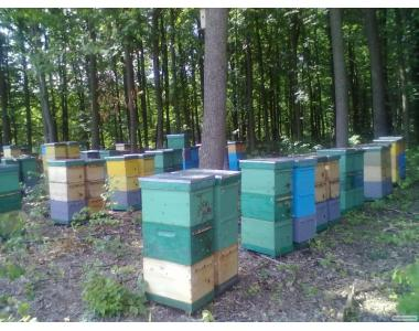 Продам пчелосемьи \ рамки дадан рут магазинная\