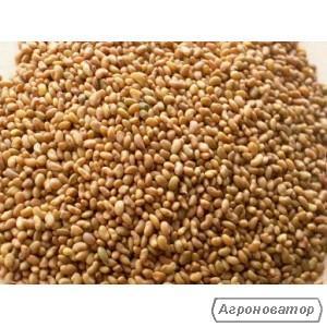 Продам семена ЛЮЦЕРНЫ в больших и малых объемах. Цена договорная!