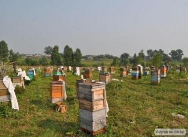 Продам бджолосім'ї української степової породи (рутовская система)