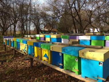 продажа бджолопакетів Карніка(F-1)