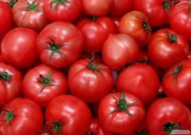 http://agronovator.ua/gds/gr_387/tomaty-optom-ot-proizvoditelya-id2044
