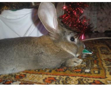 Продам свежую крольчатину