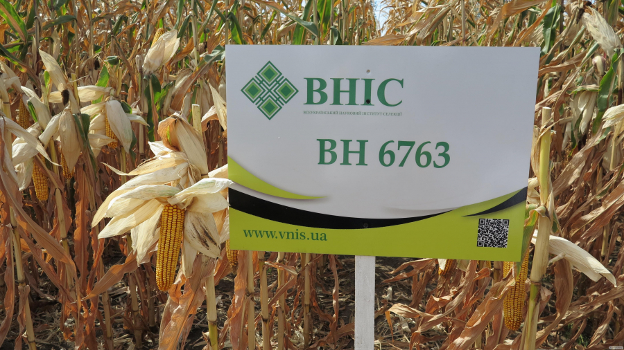 Семена кукурузы ВН 6763 (ФАО 320) от производителя