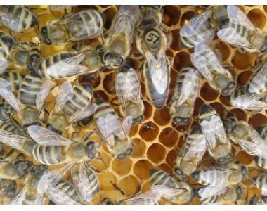 Бджолопакети типа Вучківський