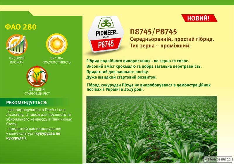 Гібрид кукурудзи П8745
