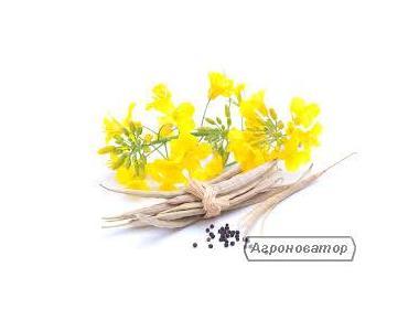 Семена рапса Гидромел