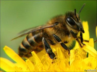 Продам 4-х рамкові бджолопакети
