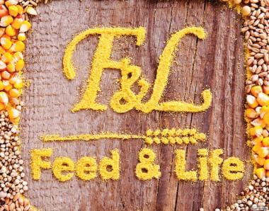 Комбікорм для курей-несучок TM FEED&LIFE