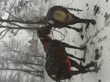 Продам коней...тежоловозов.....