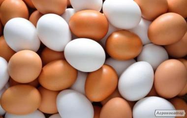 Яйцо высшей и первой категории